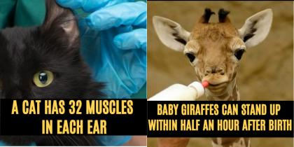 10 random facts about animals that you never knew